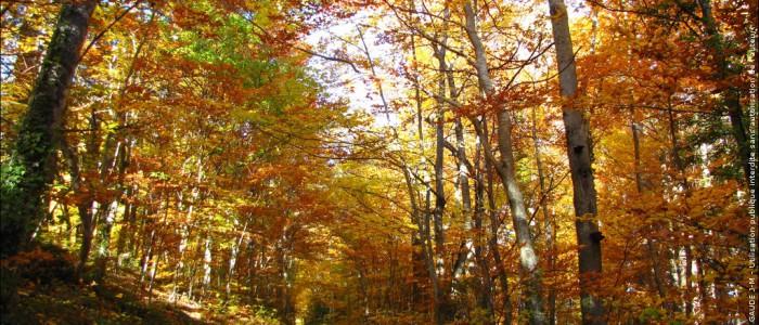 sous bois en automne 6913