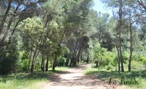 la forêt Provençale